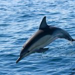Cronulla Whale watching Tours Dolphins Royal national park