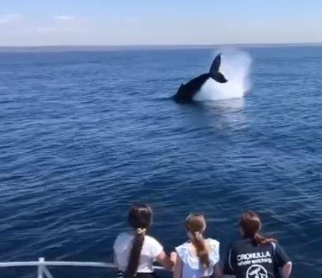 Whale watch tour Sydney