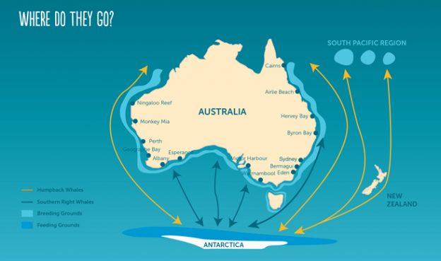 Humpbak whale season Sydney Australia
