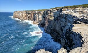 Whale watching at Royal National Park cliffs
