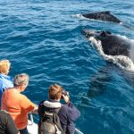 Whale Watching Tour Cronulla