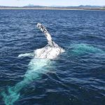 Cronulla Whale Watching Tour