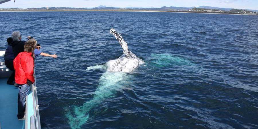 Whale watching season tours Cronulla Australia