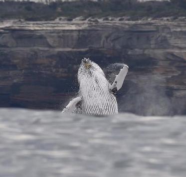 Cronulla whale tours