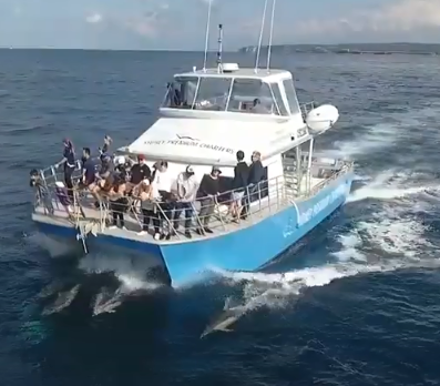 Dolphin whale eco tours Cronulla