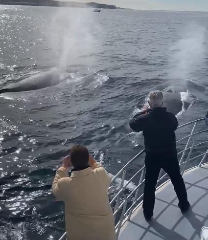 Whale watching June Cronulla Sydney